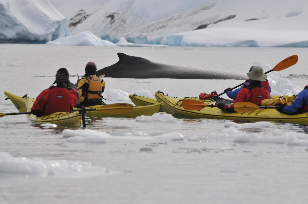antarctica-whale-watching
