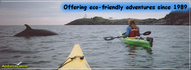 kayaking-wildlife-lighthouse-touring.jpg
